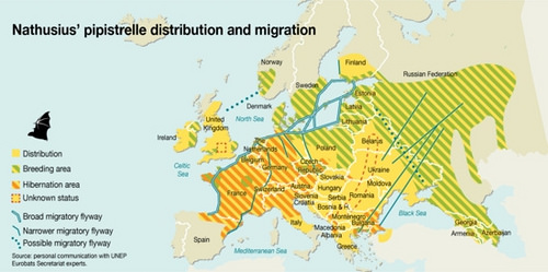 Rotte migratorie del pipistrello di Nathusius